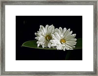 Framed Print featuring the photograph Double Delight by Elsa Marie Santoro