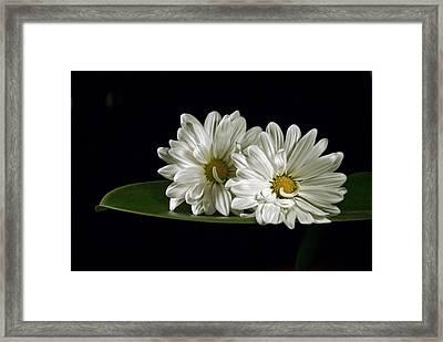 Double Delight Framed Print by Elsa Marie Santoro