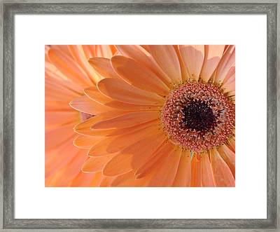 Double Delight Framed Print