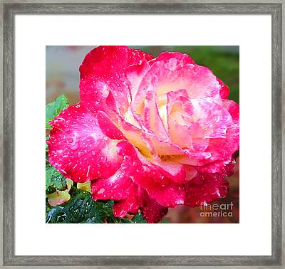 Framed Print featuring the photograph Double Delight by Patricia Griffin Brett