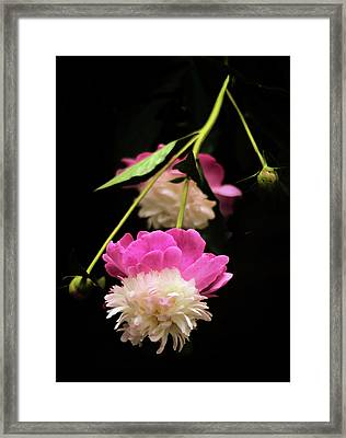 Double Dip Framed Print by Jessica Jenney
