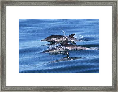 Double Dolphins And Reflections Framed Print