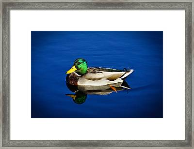 Double Duck Framed Print