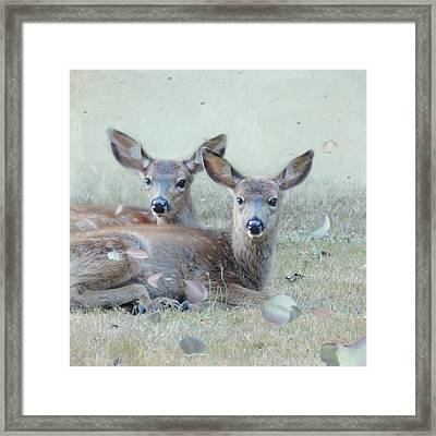 Framed Print featuring the photograph Double Gaze by Sally Banfill