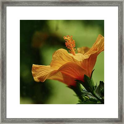 Double Grace Framed Print by Evelyn Tambour
