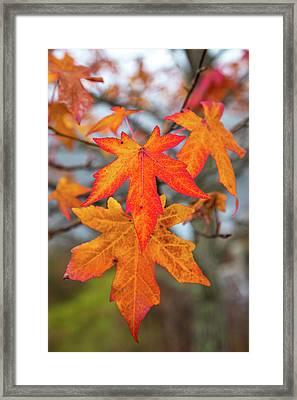 Double Leaf Framed Print