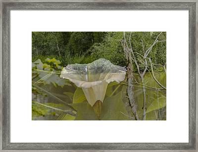 Double Framed Print by Leif Sohlman