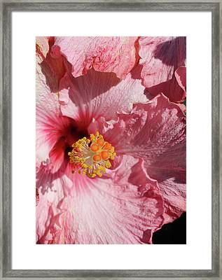 Double Petals Framed Print by Michele Caporaso