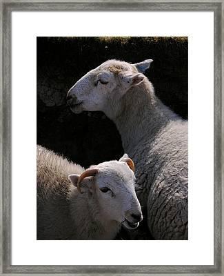 Double Portrait Framed Print by Harry Robertson