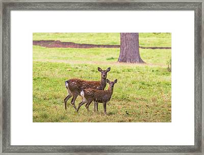 Framed Print featuring the photograph Double Take by Scott Carruthers