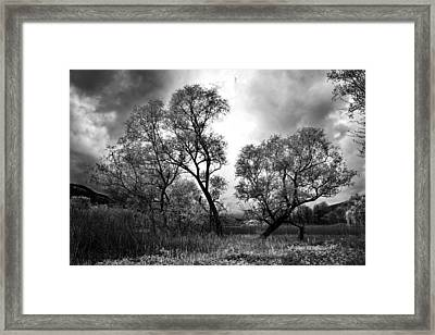 Double Tree Framed Print