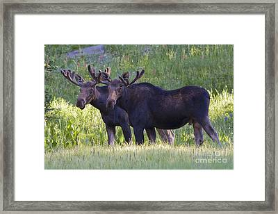 Double Trouble Framed Print by John Blumenkamp