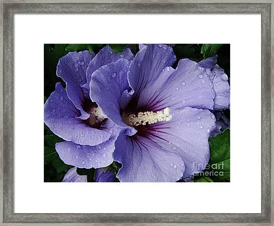 Double Trouble Framed Print by Priscilla Richardson