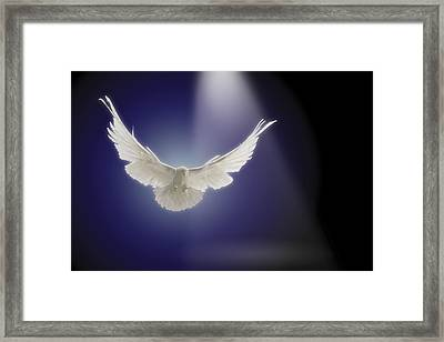 Dove Flying Through Beam Of Light Framed Print by Comstock Images