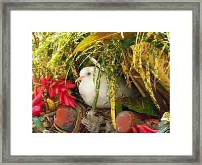 Dove In Jamaica Framed Print