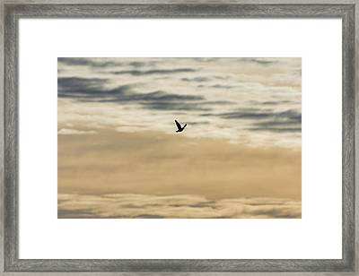 Dove In The Clouds Framed Print