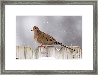 Dove In The Snow Framed Print