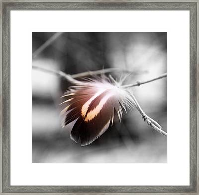Dove Tail Framed Print