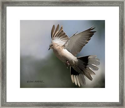 Dove Takeoff Framed Print by Don Durfee