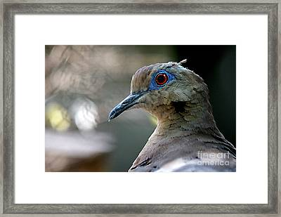 Dovely Framed Print by DiDi Higginbotham