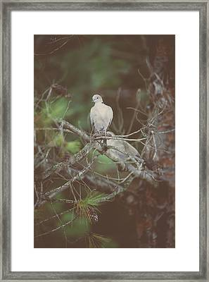 Doves In A Pine Tree Framed Print by Marco Oliveira