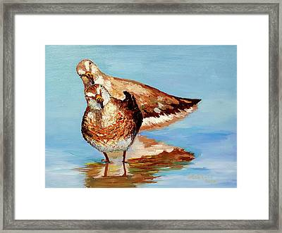 Dowitcher Birds Framed Print