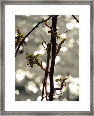 Springtime By The Creek Framed Print