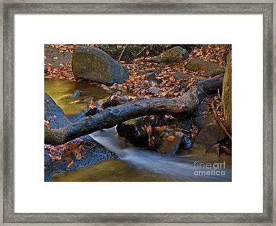 Down By The River Framed Print by Robert Pilkington