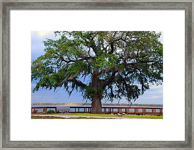 Down By The River Side Framed Print by Susanne Van Hulst