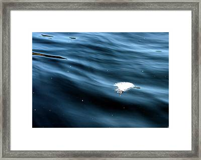 Down Feather Of Whooper Swan Framed Print