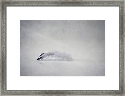 Down Feather Framed Print by Scott Norris