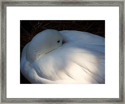 Down For A Nap Framed Print by Karen Wiles