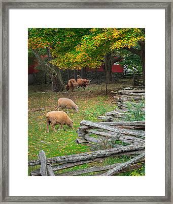 Down On The Farm 2015 Framed Print