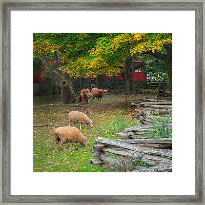 Down On The Farm Square 2015 Framed Print by Bill Wakeley