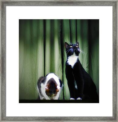 Down Or Up Framed Print by Bill Cannon