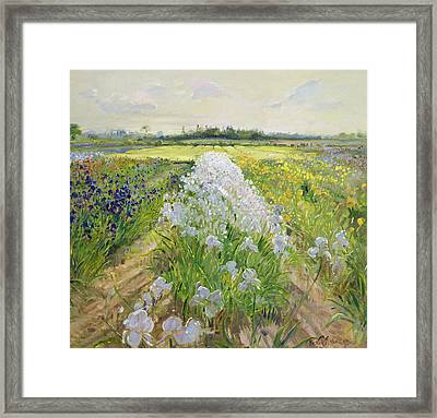 Down The Line Framed Print by Timothy Easton
