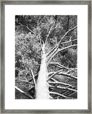 Down Tree Framed Print by Derek Clark