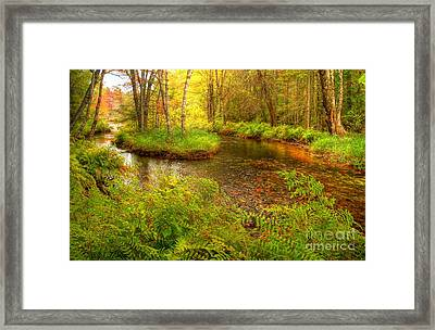 Framed Print featuring the photograph Downeast Fall Stream by Alana Ranney