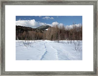 Downes - Oliverian Brook Ski Trail - White Mountains New Hampshire  Framed Print by Erin Paul Donovan