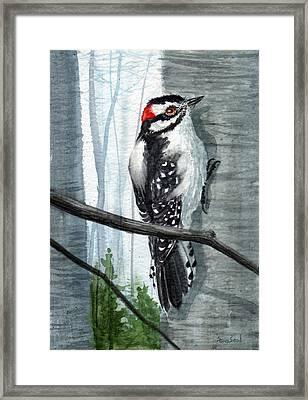 Downey Woodpecker Framed Print by Sean Seal