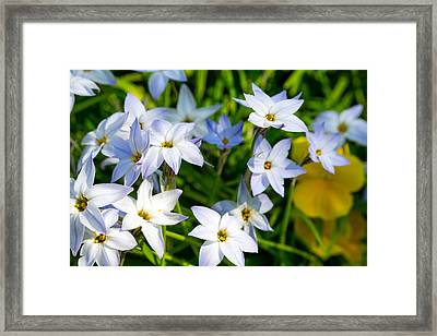 Downtown Wildflowers Framed Print