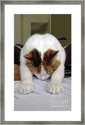 Framed Print featuring the photograph Downward Facing Cat  by Bill Thomson