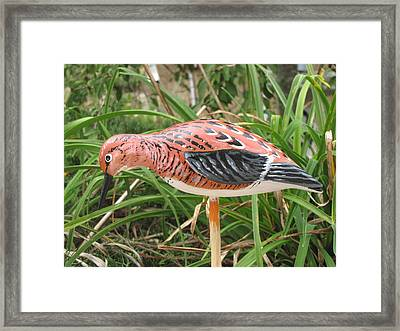Downward Sanderling Framed Print