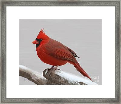 Downy Winter Male Framed Print by Rand Herron