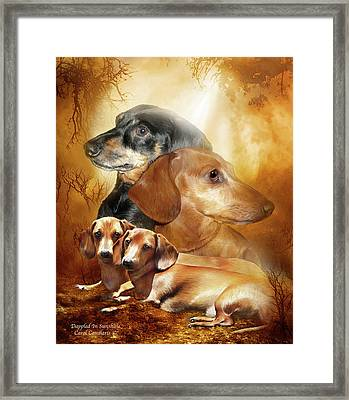 Doxies - Dappled In Sunshine Framed Print by Carol Cavalaris