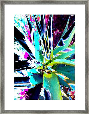 Aloe Shadows 6  Ref.dp45  Framed Print by Rheta-Mari Kotze