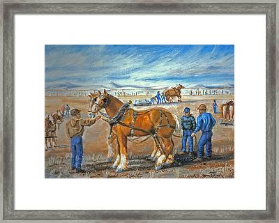 Draft Horse Pull Framed Print