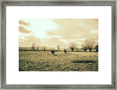 Draft Horses In A Pasture Framed Print by Pati Photography