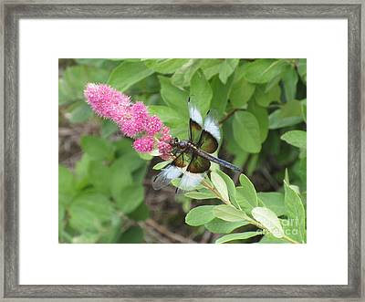 Draggin The Line Framed Print by Marie Neder