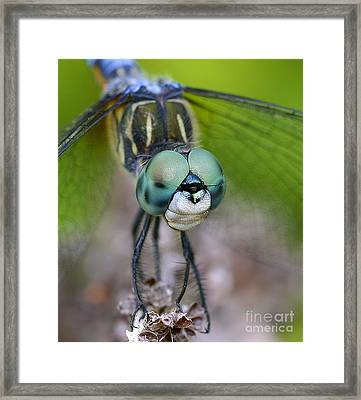 Bug-eyed Framed Print
